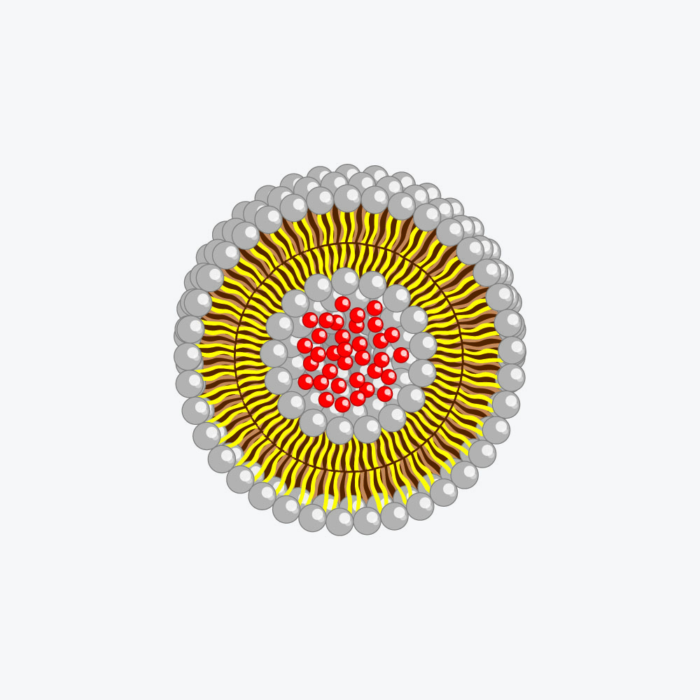Fig. 1. Liposome consists of double lipid layer built of phospholipids and cholesterol, which encloses active ingredients.